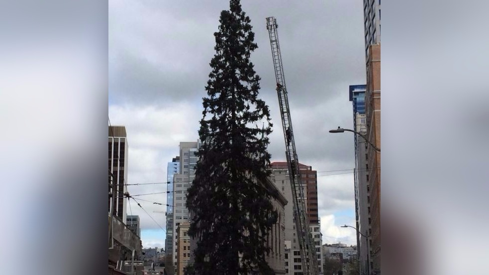 Man in tree shuts down Seattle traffic